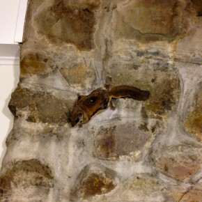 Flying Squirrel