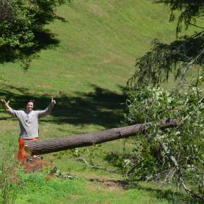 Felling the Tree